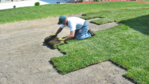 Sod insulation Wagner Sod Company - Landscaping & Irrigation Inc.- Twin Cities